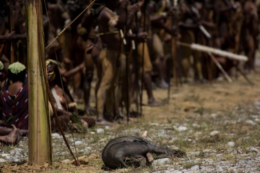 A pig has just been stolen, and soon a war will break out between the villages